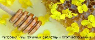 Чем полезен рапсовый мед